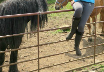 leggings on a fence